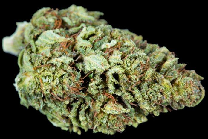 Buy real weed online, buy weed online, buy weed online Canada. Can you buy weed online, buy recreational weed online, buy real weed online cheap.